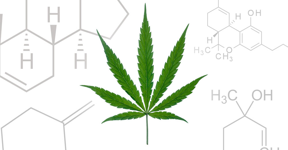 IS CBD MARIJUANA?
